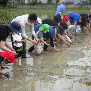 みんな泥んこ「田植え」