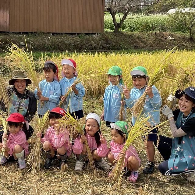 稲刈り⭐️年長組